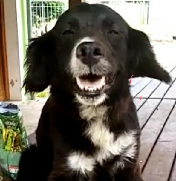 Smile adottata