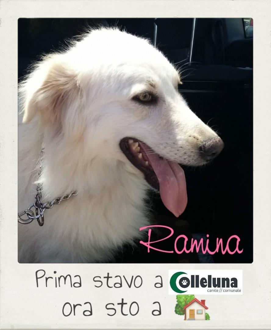 Ramina adottata