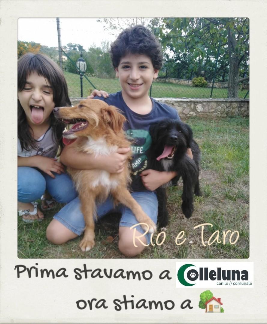 Rio e Taro adottati
