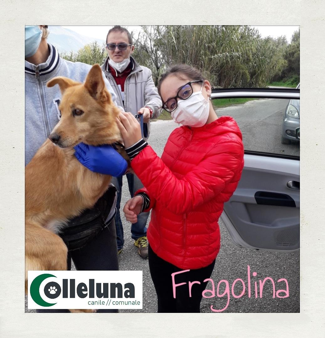 Fragolina adottata