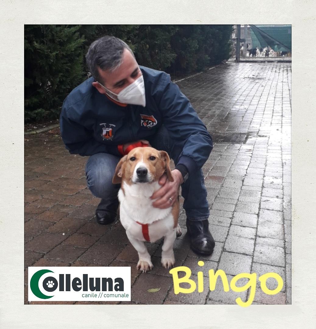 Bingo adottato