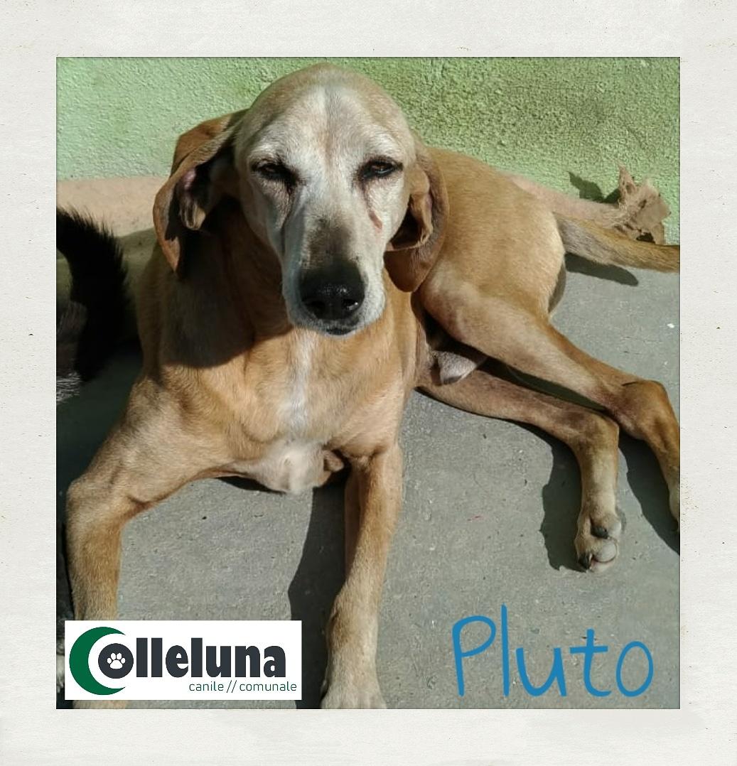 Pluto adottato